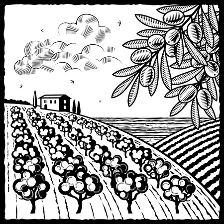 Landscape with olive grove black and white Vector