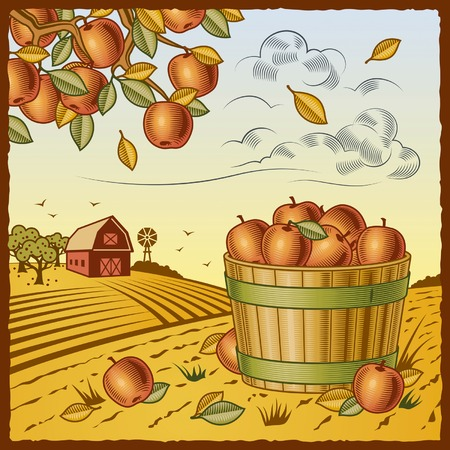Landscape with apple harvest Stock Vector - 7916611