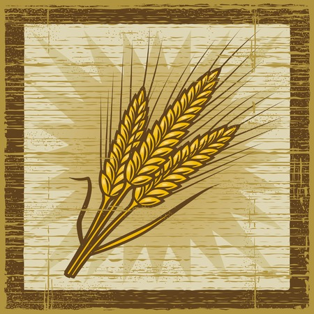 wheat illustration: Orecchie di cereali retr�
