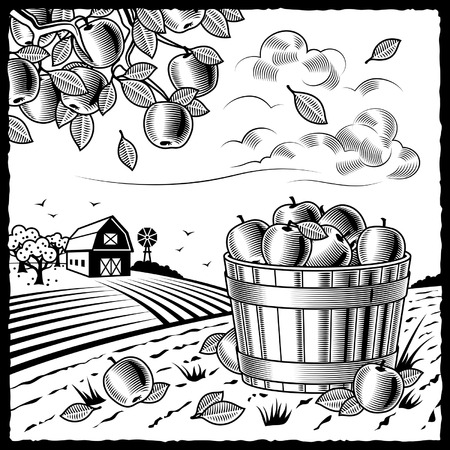 barn black and white: Landscape with apple harvest black and white Illustration