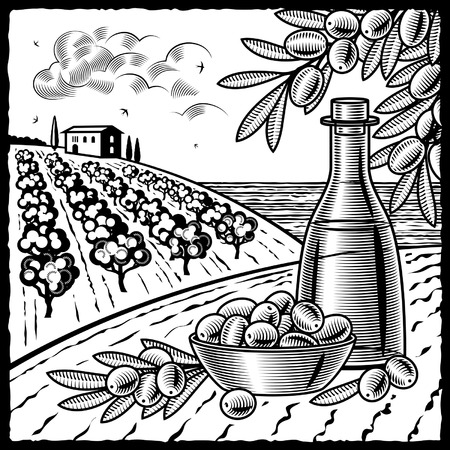 Olive harvest black and white Illustration