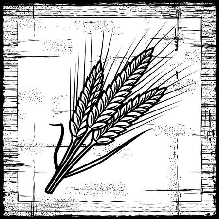 centeno: Blancos y negro de orejas de cereales retro Vectores