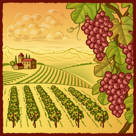 wineries: Vineyard landscape Illustration