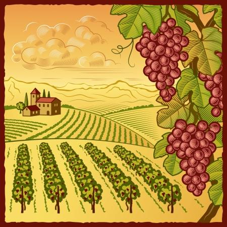 Wijngaard landschap