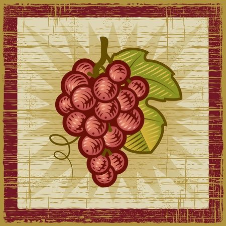 Retro grapes bunch Vector
