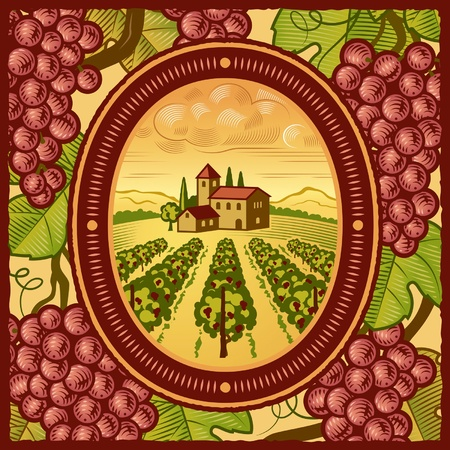 Vineyard Stock Vector - 9348384