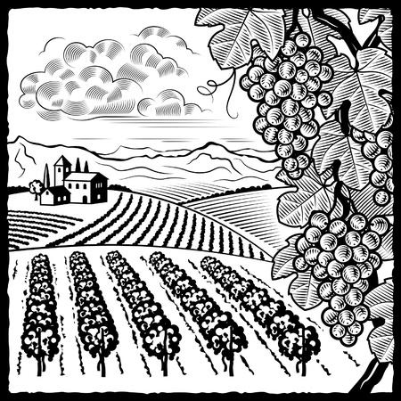 Vignoble paysage noir et blanc