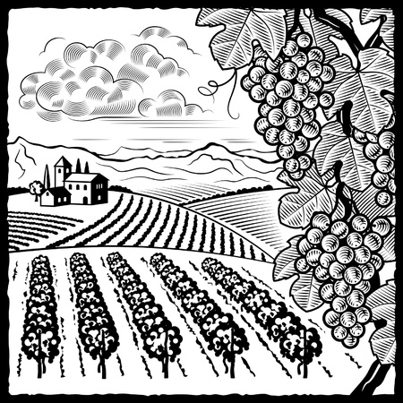 black and white line drawing: Vineyard landscape black and white Illustration