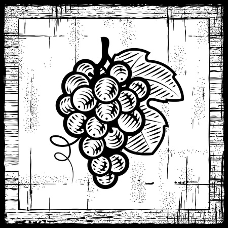 Retro grapes bunch black and white Vector