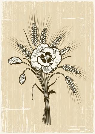 centeno: El trigo y el ramo de amapolas Retro Vectores