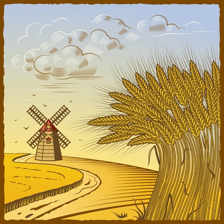 Wheat fields Vector