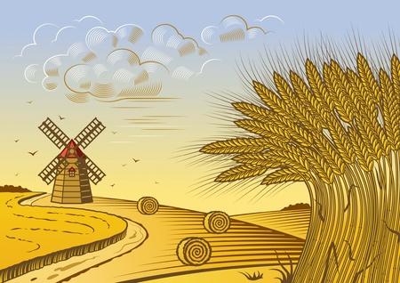 fardos: Paisaje de campos de trigo Vectores