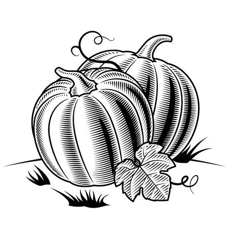 Retro pumpkins black and white Vector