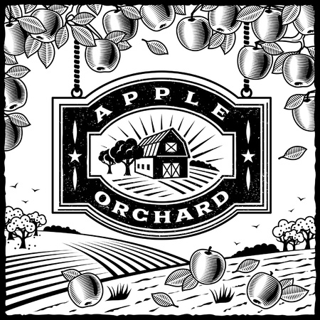 arbol de manzanas: Apple Orchard en blanco y negro Vectores