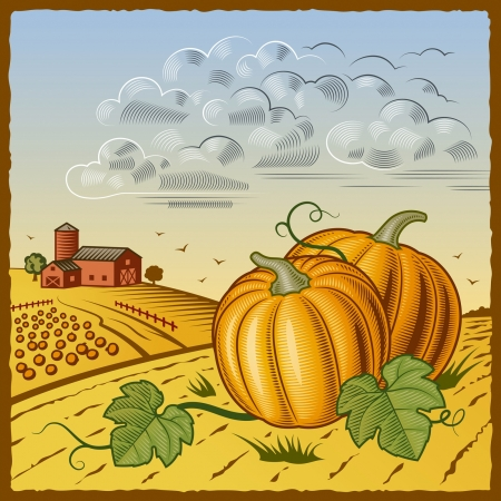 Landscape with pumpkins Vector