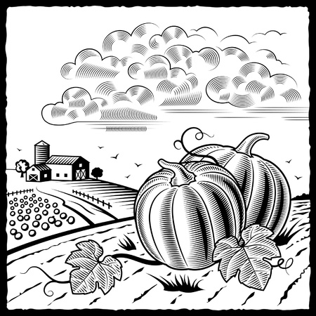 Landscape with pumpkins black and white Illustration