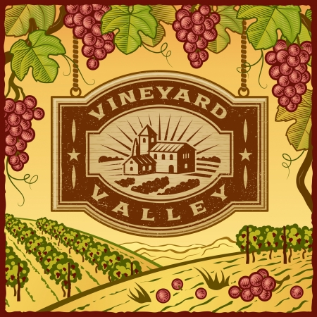 bunch of grapes: Vineyard Valley Illustration