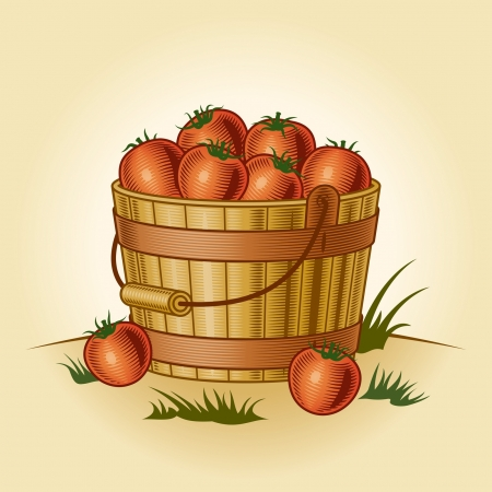 Retro bucket of tomatoes Vector