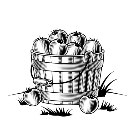 bushel: Retro bucket of tomatoes black and white