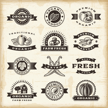 olive farm: Vintage organic harvest stamps set Illustration