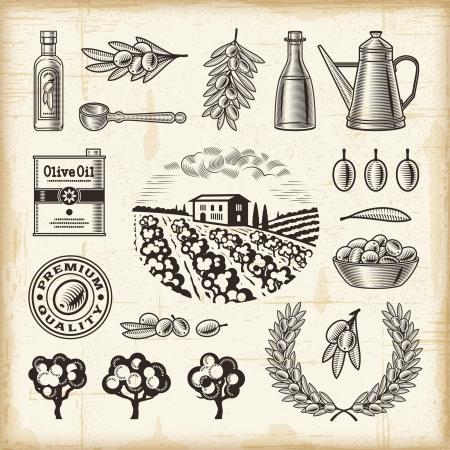 olive oil: Vintage olive harvest set Illustration