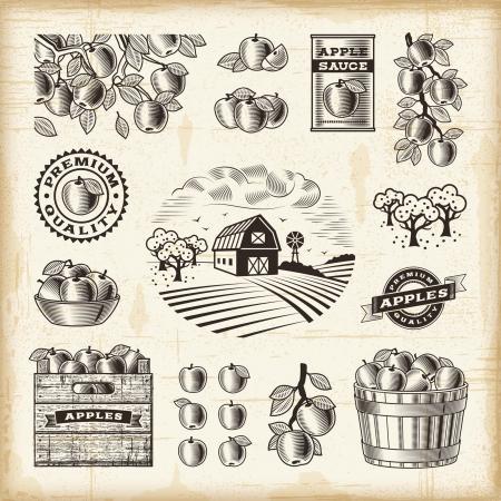 xilografia: Vintage conjunto de cosecha de manzana