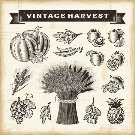 Vintage harvest set Vector