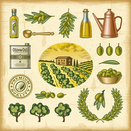 Vintage colorful olive harvest set Vector