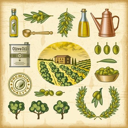grove: Vintage colorful olive harvest set