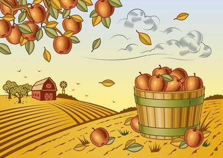 bushel: Apple harvest landscape