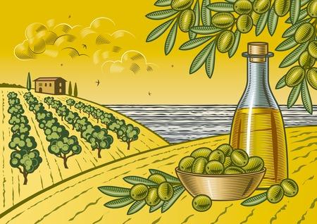 Oliva paisaje cosecha Ilustración de vector