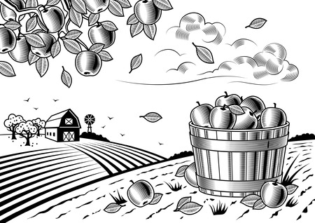 autumn garden: Apple harvest landscape black and white Illustration