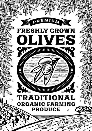 hoja de olivo: Cartel aceitunas Retro blanco y negro Vectores