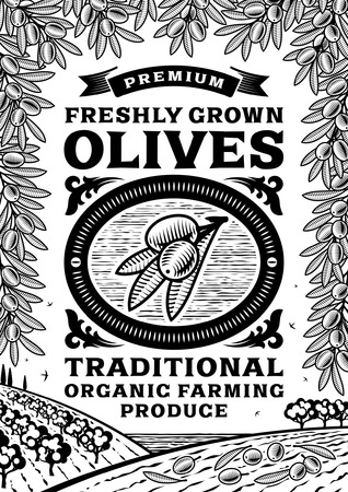 olive farm: Retro olives poster black and white Illustration