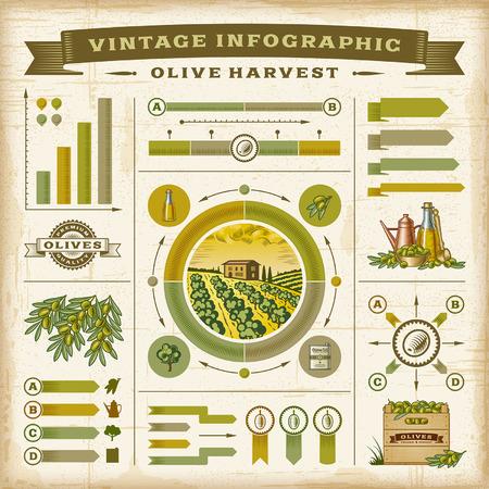 Vintage olive harvest infographic set