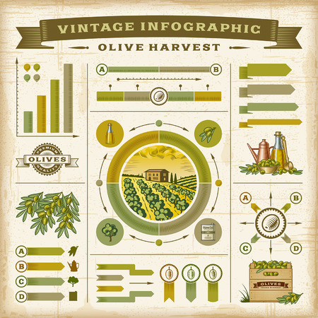 olive farm: Vintage olive harvest infographic set