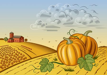 harvest field: Landscape with pumpkins