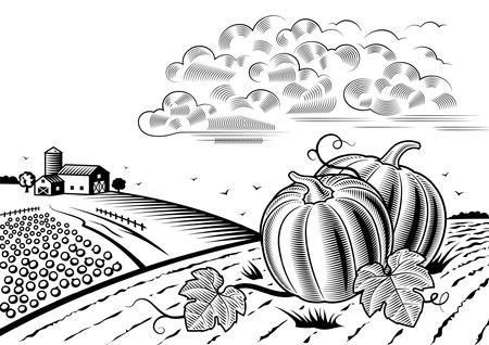 sky line: Pumpkin harvest landscape black and white