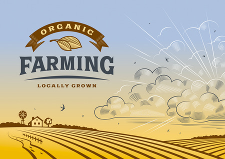 horizon over land: Organic Farming Landscape