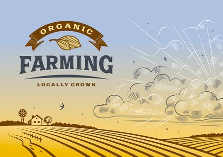 Organic Farming Landscape Zdjęcie Seryjne - 42489497