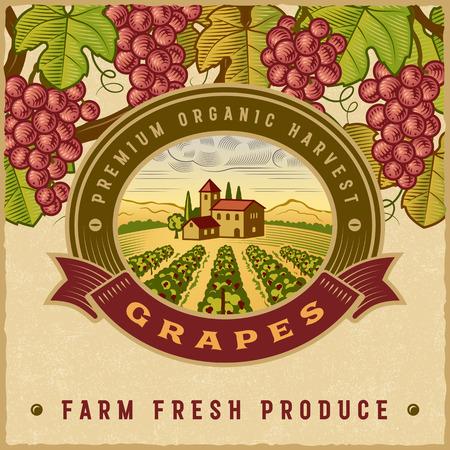 tuscany vineyard: Vintage colorful grapes harvest label Illustration