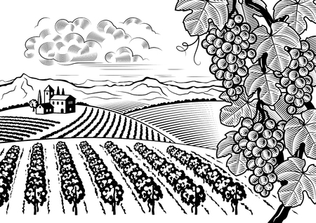 drawing trees: Vineyard valley landscape black and white