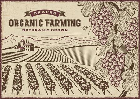 Druiven Biologische landbouw landschap Stockfoto - 74620661