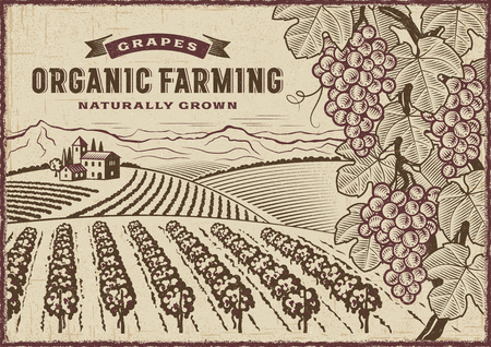 Grapes Organic Farming Landscape