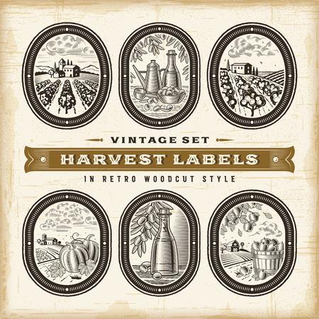 Vintage harvest labels set.