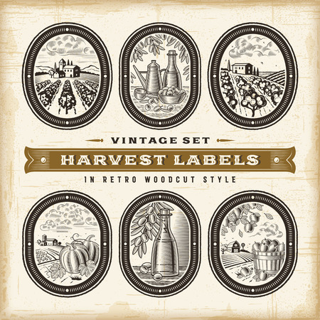 Vintage harvest labels set.