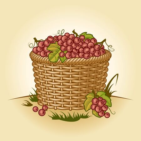 Retro basket of grapes Illustration