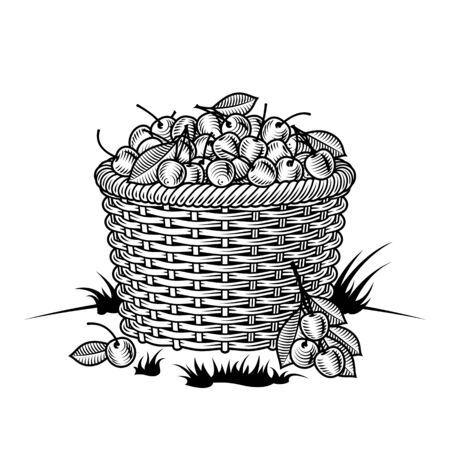 Retro basket of cherries black and white