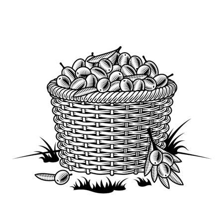 Cesta retro de aceitunas en blanco y negro