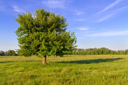 Lonely tree on a Sunny day photo